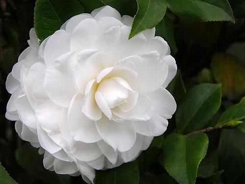 vinhomes-gardenia-hoa-danh-danh